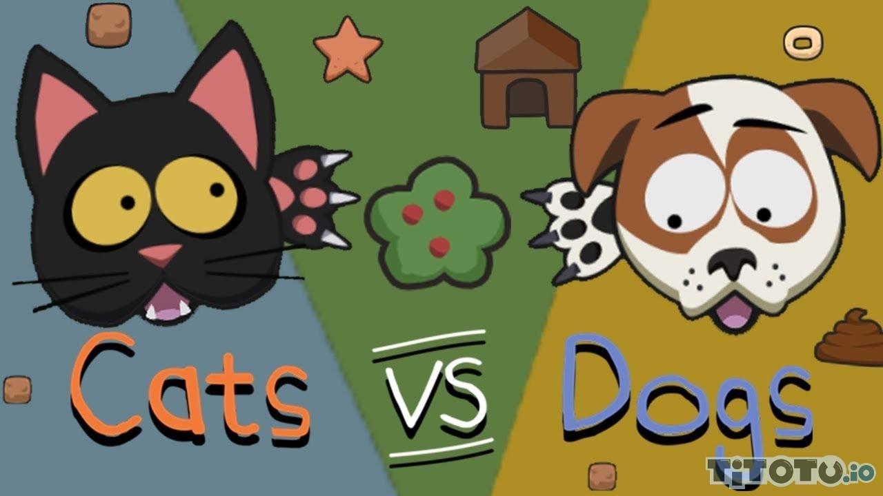 Обычные игры с котами