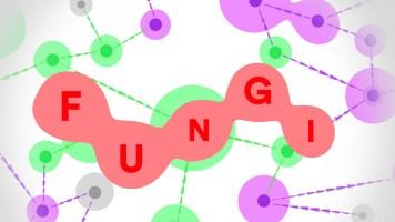 Fungi io | Fungos io — Jogue de graça em Titotu.io