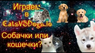 Играем в CatsVSDogs.io. Собачки или кошечки?